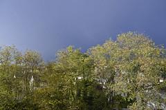 2019.11.12.02 NOISY-LE-GRAND - contraste (alainmichot93 (Bonjour à tous - Hello everyone)) Tags: 2019 france europe ue unioneuropéenne frankreich francia frankrijk frança γαλλία франция îledefrance seinesaintdenis noisylegrand arbre tree albero baum árbol árvore boom δέντρο дерево ciel sky cielo himmel hemel céu небо ουρανόσ nuage clouds nubes nuvens wolken nuvole σύννεφα облака soleil sun sunne sol sole zon ήλιοσ солнце acacia nikon nikond5100 alainmichot