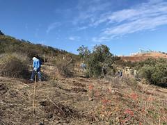 reforestacion1---9