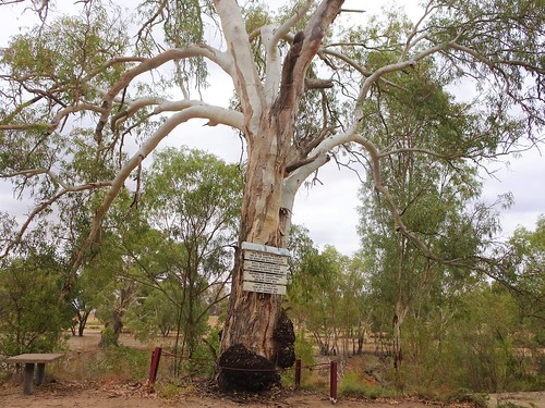 Pamamaroo. On Pamamaroo Creek beside the Darling River. Giant River Red Gum signage about  the ill fated Burke and Wills expedition. Their camp site was here in 1860 and early 1861. .