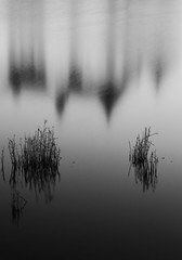 Glücksburg - Study 1 (ECKE86) Tags: bw black blackandwhite white grey monochrome nocolor pont lake water gras abstract longexposure glücksburg schloss reflection canon eos70d 2019 winter