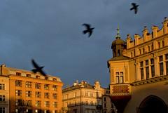 Autumn sun in Krakow (Anders_3) Tags: poland krakow easterneurope oldtown krakowclothhall unescoworldheritagesite architecture nikon fall autumn sun birds pigeon kraków square sukiennice 7s77708v4