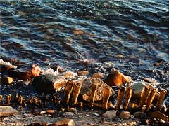 On the Baltic coast (Ostseetroll) Tags: geo:lat=5412860490 geo:lon=1093768690 geotagged deu deutschland grömitz kagelbusch schleswigholstein ostsee küste coast wasser water olympus em10markii