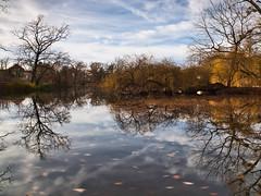 Reflexion (Naturportal) Tags: panasonic dmcgx8 olympus m1240mm f28 reflexion refection spiegelbild natur bäume äste see wasser langzeitbelichtung longexposure