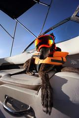 DGB_3509a (d.rizzle) Tags: boat doggles lake orange