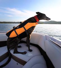 DGB_3461a (d.rizzle) Tags: branson boat doggles lake orange