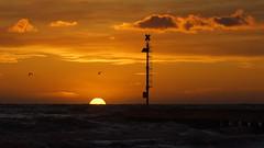 Volo al tramonto (Darea62) Tags: sunset sea sky birds nature
