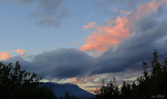 That's Why We Call it the Blues (Lani Elliott) Tags: mountwellington kunanyi moody dramatic sunset sky cloud clouds trees silhouette scene scenic view scenictasmania blue blues moodyblues lanielliott nature naturephotography