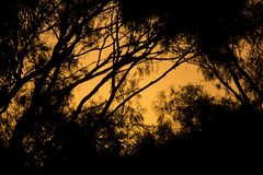 The glow beyond (Keith Midson) Tags: trees tree sunset sky canon sigma 150500mm
