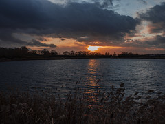 A Stormy Sunset (Ian M Bentley) Tags: stanwick stanwicklakes lakes water trees tree treeline colours colors countrypark northamptonshire rockinghamforesttrust endc rushden wellingborough olympus omd em1ii 12100mm zuiko zuikopro prolens 24200mm wideangle telephoto zoomlens red orange pink blue yellow silhouette silhouettes sky clouds darkclouds rainclouds stormy stormyweather outdoor reflections goldenhour winter december lateafternoon serene landscape waterscape england uk europe glorious lake park sunset dusk twilight endoftheday