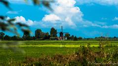 Holland (Eduard van Bergen) Tags: holland holanda dutch netherlands niederlande pays bas polder veld field meadow weide green groen rural buitengebied vista sony dslr a200 35mm still picture foto photograph 35105mm zomer summer sommer été seasons 2010