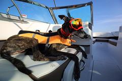 DGB_3428a (d.rizzle) Tags: branson boat doggles lake orange