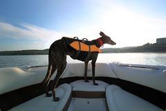 DGB_3458a (d.rizzle) Tags: branson boat doggles lake orange