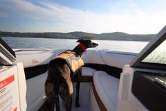 DGB_3445a (d.rizzle) Tags: branson boat doggles lake orange