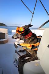 DGB_3434a (d.rizzle) Tags: branson boat doggles lake orange