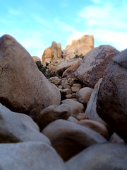 (Kaater) Tags: joshuatree joshuatreenationalpark nationalpark usa arizona nature