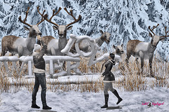 ☆ POST #1027: Amor nevado.   Snowy love. (Isabel Unplugged) Tags: lookevent event exclusive desing style fashion tmcreation heartposes artkostore poses bento animation secondlife