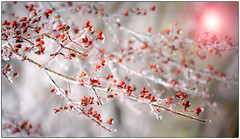 Ice Storm Magic (PetrusJohannes) Tags: icestorm roanoke icy weather virginia outdoors freezing rain sony 24105 f4 sonya7rii