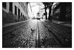 *After the rain. (niko**) Tags: leica leicam2 elmarit28mmf28 kodak trix400 135 35mm filmphotography lisboa lisbon glóriafunicular fivedaysinlisbon