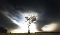 A tree (Anthony_Murray) Tags: dublin phoenix park tree grass sky clouds