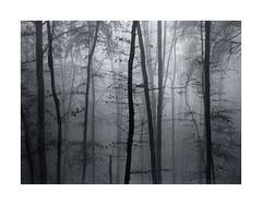 November Wood (MT10) (Wolfgang Moersch) Tags: fp4 tanol kallitype mt10goldtoner potassiumcitratedeveloper hahnemühleplatinumrag
