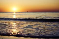 sunset (Jos Mecklenfeld) Tags: zee meer sea noordzee nordsee northsea strand beach sunset sonnenuntergang zonsondergang totoro dutchshepherd hollandseherder holländischerschäferhund shepherd shepherddog herder herdershond schäferhund dog hund hond sonya6000 sonyilce6000 sonye55210mmf4563oss sel55210 callantsoog noordholland netherlands