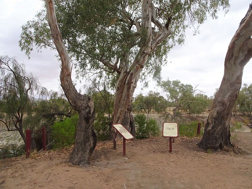 Pamamaroo. Information boards aobut Menindee's tarzan and the Burke and Wills Expedition camp here. On Pamamaroo Creek adjacent to the River Darling.