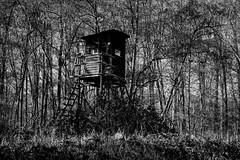 Wildlife watching - Wildbeobachtung (b_kohnert) Tags: yellow
