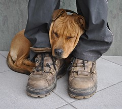 Frozen (padfootpadfoot) Tags: street dog boots