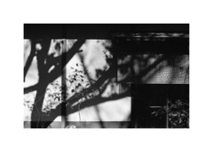 Shadows (odeleapple) Tags: nikon f2 nikkor 50mm yellowfilter kodak400tx film monochrome analog bw shadow