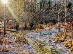 Early morning sunbeam on an icy trail