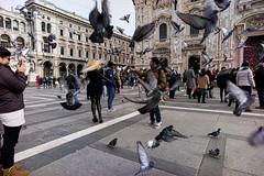 Christmas Cracker (Digital Salt) Tags: street italy milan pigeon voigtländer sonya7ii sanfrancisco ca europe sony unitedstatesofamerica streetphotography sonyalpha voigtländer21mmf4