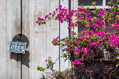All hours (A Different Perspective) Tags: bali indonesia seminyak blue door flower green open pink shop sign street text window wood worn