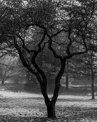 Scream Tree (Faron Dillon) Tags: tree bw sony nature art artistic rain fog winter movie scream mask branches outdoors snow cold toronto park