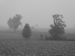 Nebbia in Val Padana (fotomie2009) Tags: autumn autunno fog nebbia mist countryside campagna alberi trees monochrome monocromo bw campi arato fields pianura plain lombardia italy italia greys grigi