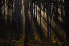 just light (WeVe1) Tags: sunrays sunbeams wood