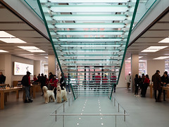 Shopping for two. (Valeria Core) Tags: newyorkcity people dogs apple shopping store manhattan stairs