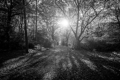 """autumn light spilling into the forest, fine art black & white. Bois du Breuil (Forest of Breuil) near Honfleur, Calvados, Normandie (Normandy), France. (grumpybaldprof) Tags: """"canon70d"""" """"sigma1020mmf456dchsm"""" """"wideangle"""" ultrawide bw blackwhite """"blackwhite"""" """"blackandwhite"""" noireetblanc monochrome """"fineart"""" ethereal striking artistic interpretation impressionist stylistic style contrast shadow bright dark black white illuminated mood moody atmosphere atmospheric landscape scenery vista autumn fall trees wood forest branches leaves """"boisdubreuil"""" """"forestofbreuil"""" honfleur normandy normandie calvados france vasouy penndepie conservation """"conservatoiredulittoral"""" rhododendrons """"coastalconservancy"""" bois deciduous coniferous woods coastline """"dukesofnormandy"""" french kings """"philippeauguste"""" breuil wildlife wildboar """"pinemarten"""" """"redfox"""" deer """"forestwalk"""" shapes patterns path walk track"""