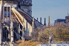 303 Paris Novembre 2019 - Notre-Dame de Paris (paspog) Tags: paris france notredame novembre november notredamedeparis cathédrale cathedral kathedral katedral