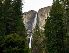 DSC07163 (wNG555) Tags: 2015 california yosemite yosemitenationalpark yosemitevalley yosemitefalls a6000 fav25
