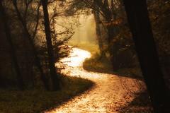 Follow the light (Zoom58.9) Tags: park forest trees dark way path light nature outside sunlight wald bäume dunkel weg natur draussen sonnenschein canon canoneos50d