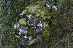2019.12.07 La Pelegrina-21 (nature.life.street) Tags: naturaleza nature barranco rio riodulce