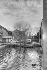 La balade de la cane (Jean-Marie Lison) Tags: x100t mons étang canard île hdr nb noiretblanc