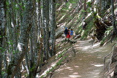sBs_1907(vac2)_0117-2 (schoolartBYschoolboy) Tags: auvergne puydedome vulcan lake family forest