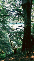 IMG_20190720_142633479-2 (schoolartBYschoolboy) Tags: auvergne puydedome vulcan lake forest