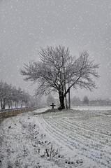 La prima nevicata (celestino2011) Tags: neve albero inverno strada croce