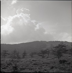 (✞bens▲n) Tags: hasselblad 500cm ilford 50 carl zeiss 80mm f28 film analogue blackandwhite japan nagano mountains landscape trees nature sky ikenodaira panf