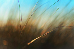 feeling God's breath (Fr@ηk ) Tags: mrtungsten62 frnk europe domburg canon6d 1885mm focus dof pov bokeh color adult seethrough grass art plant texture water nature painting pattern canvas abstract leaf sky desktop line outdoors noperson blur tree wear photography fog pastel acrylicpaint lawn artistic macrophotography aquatic insubstantial tintsandshades graphics wallpaper sand brush reed background underwater sea paper fractal retro green vintage modernart veins mist light flower algae grain fil analog effect fx