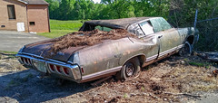 The end of a Classic (Dave* Seven One) Tags: chevrolet caprice gm 1960s classic vintage abandoned forgotten junk salvage dead broken used spent rust rusty rot decay patina roadside