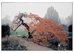 (schlomo jawotnik) Tags: 2019 november hannover herrenhäusergärten berggarten park bäume baum stamm kies weg analog film kodak kodakportra160 usw