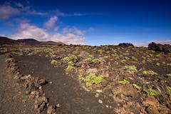 Path Through the Lava (PLawston) Tags: la palma canary islands spain fuencaliente lava field